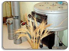 купить пшеницу для производства муки